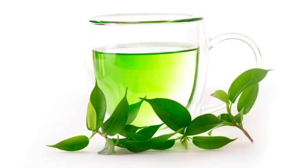 green-tea-plant-photo
